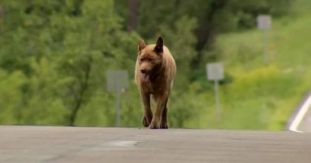 Bruno le chien qui marche 6km par jour