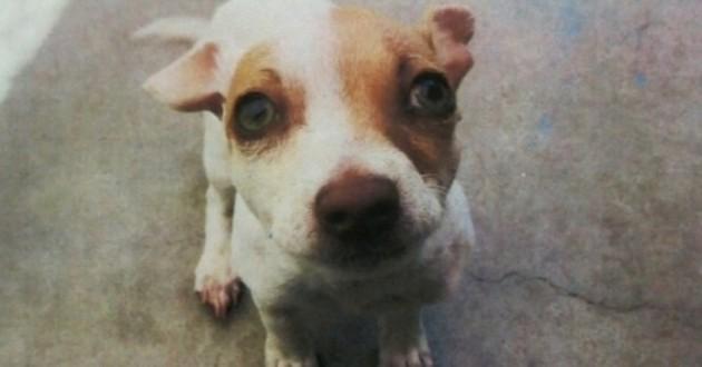 Un chien retrouvé sous l'effet de drogue