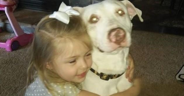 buddy chien retrouvé facebook