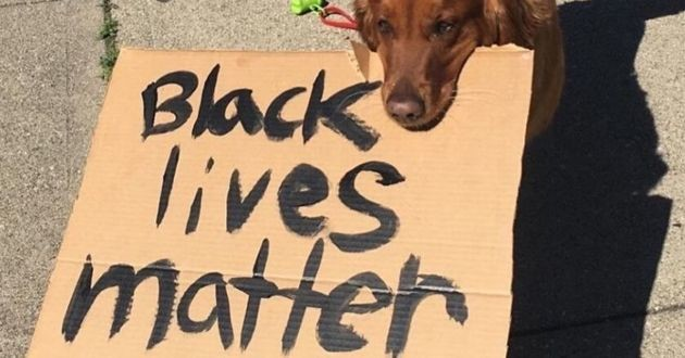 buddy black lives matter