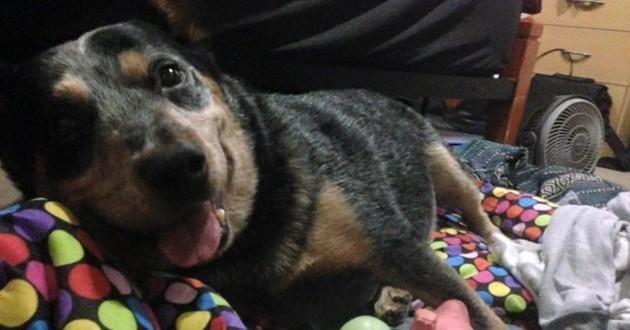 Avant de mourir, ce chien a réalisé ses rêves et est parti en paix grâce à sa maîtresse