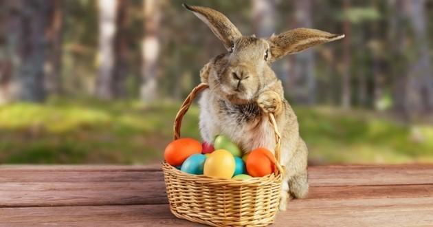 10 adorables lapins qui nous font pousser des cris d'émerveillement !
