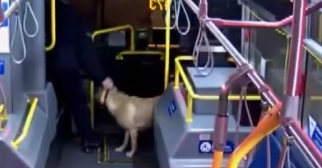 chien dans un bus
