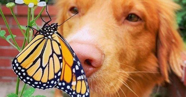 chien qui renifle un papillon