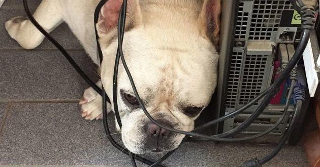 Perpignan : en voulant secourir son chien, cet homme meurt électrocuté