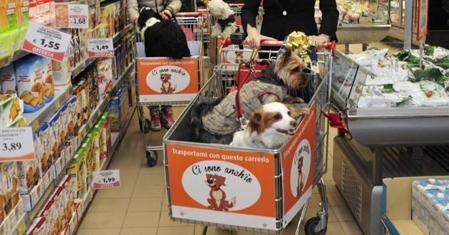 En italie les chiens ont une place dans le caddie et font les courses insolite wamiz - Supermarche ouvert autour de moi ...