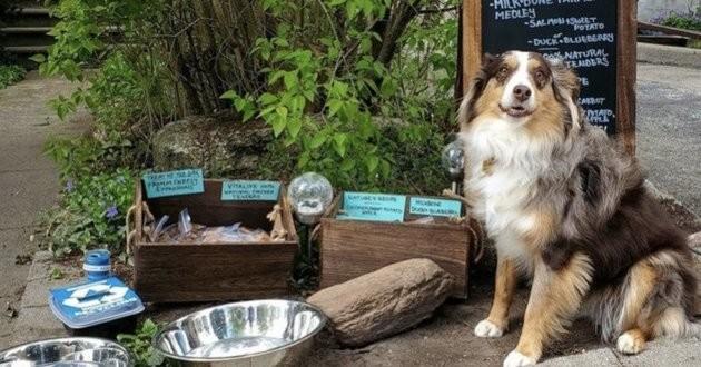 café pour chiens
