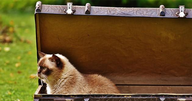 Cage de transport pour chat : 3 bons plans à moins de 40 euros