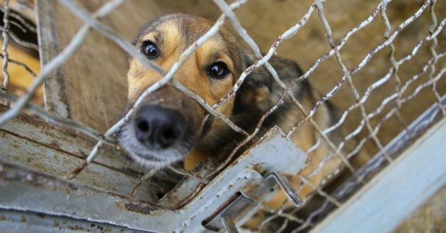 un chien en cage