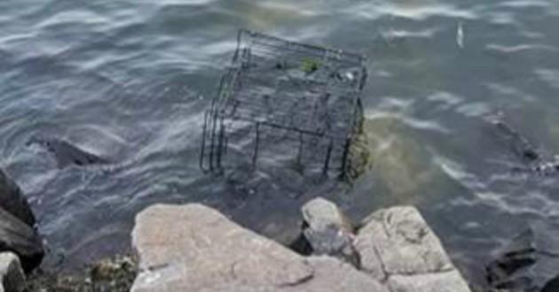 cage eau chien