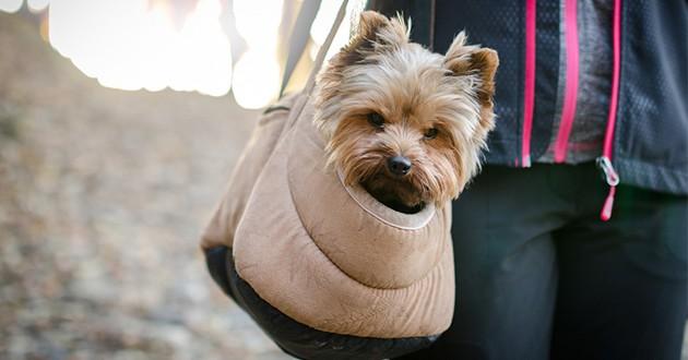 Cage de transport pour chien : 3 bons plans ne pas rater