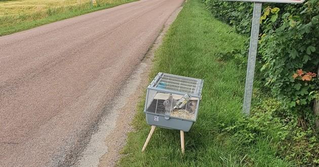 cage avec des lapins