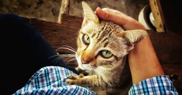 un chat fait un câlin à son maître