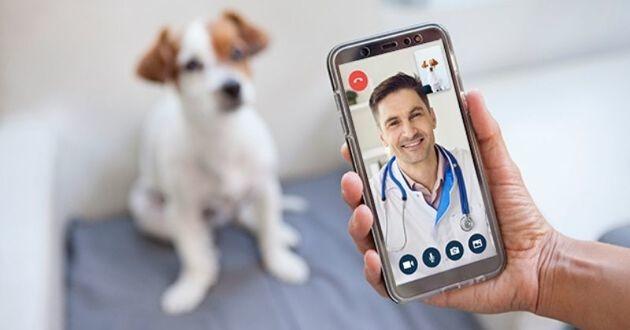 vétérinaire en visio consultation