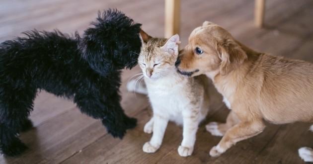chiens et chat qui jouent