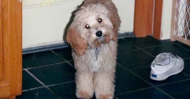 chien retrouvé 11 ans après abandon