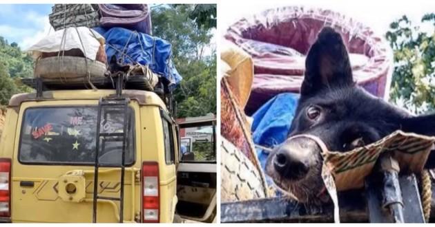 chien attaché camion