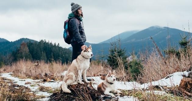 chiens en road trip