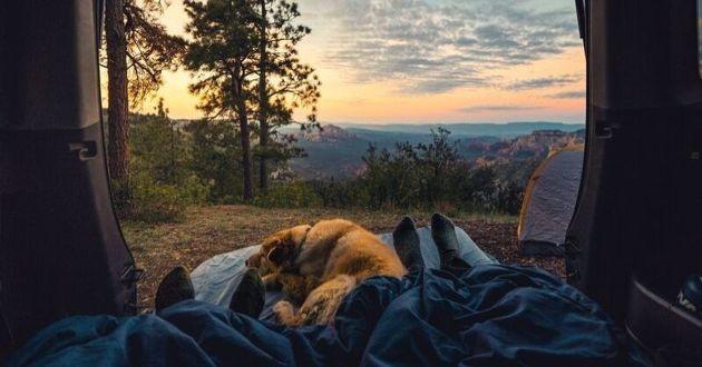 un camping car et un chien