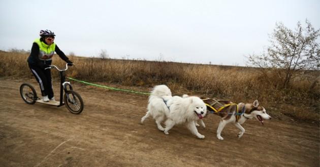 une femme qui fait de la cani-trottinette avec ses deux chiens