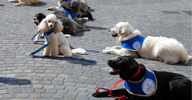 chiens d'assistance