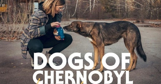 Documentaire dogs of Tchernobyl