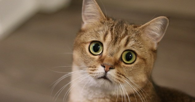 chat qui a l'air stressé