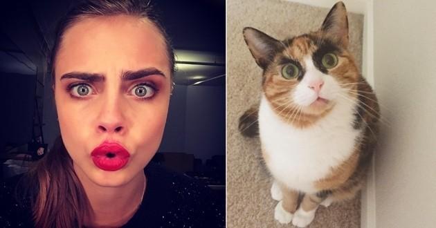 chat sosie de Cara Delevingne
