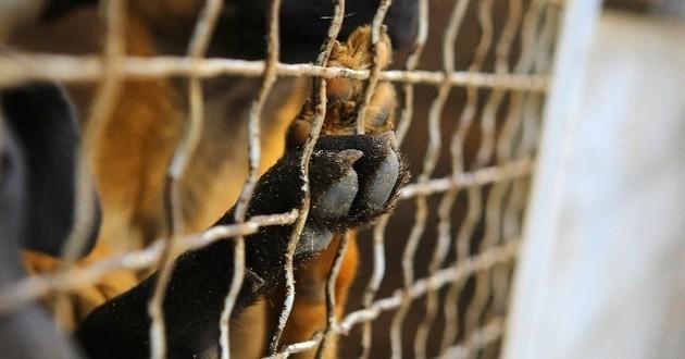 Carrefour retire (enfin) ses produits à base de viande de chien — Chine