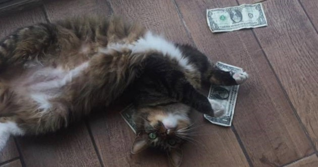 chat argent
