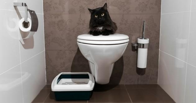 chat toilettes litière