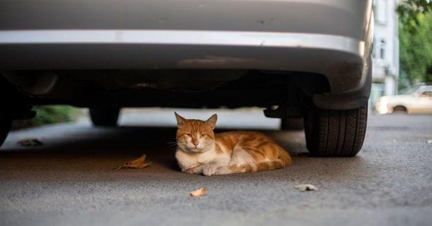 chat caché sous une voiture