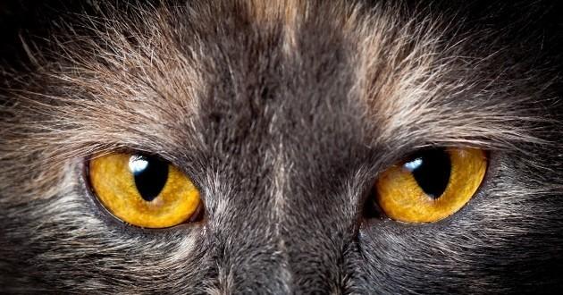 On vous dit tout sur la vue et l'odorat du chat !