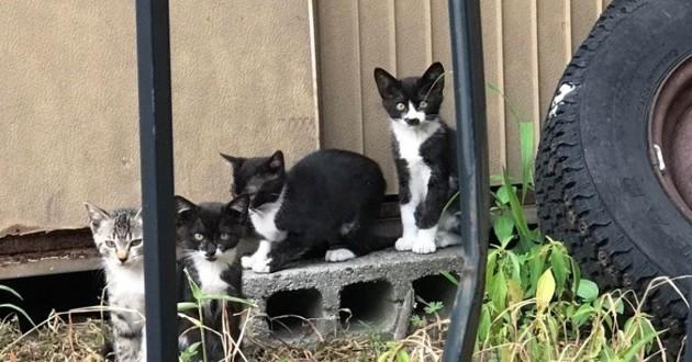 chatons noirs et blancs