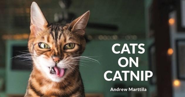 un chat qui a consommé de l'herbe à chat
