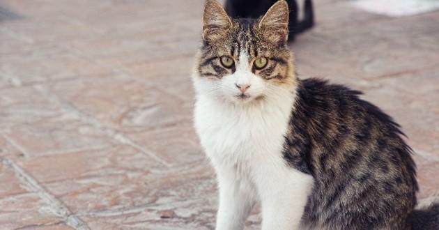 chat retrouvé après 14 ans