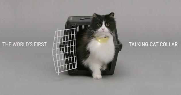 chat collier pour parler