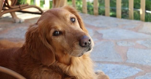 Comment donner un comprimer à son chien ? Un vétérinaire vous répond !