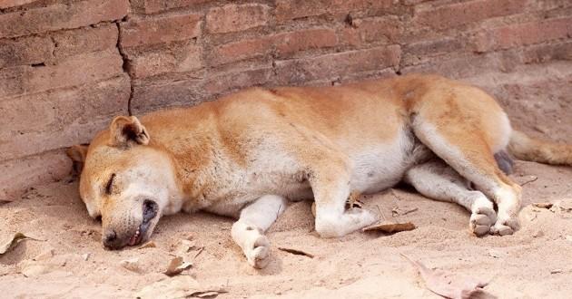 chien maltraité allongé