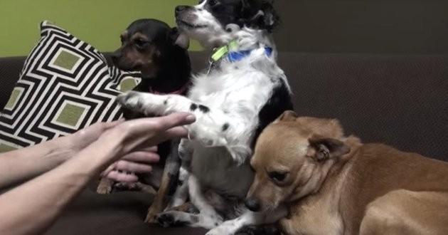 3 chiens attendent le retour de leur maître