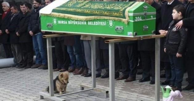 Cesur le chien endeuillé