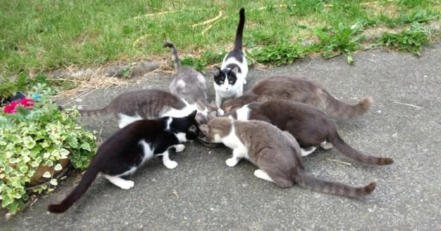 Association chalonn chats
