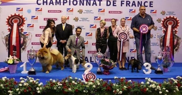 championnat france chiens de race