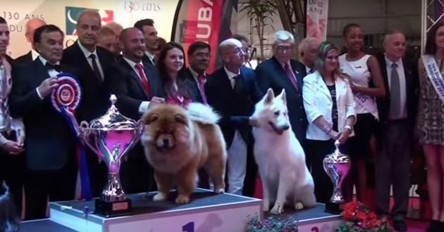 concours chiens de race