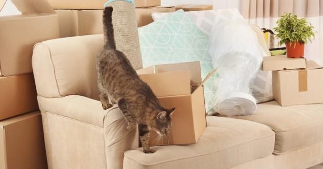 chat déménagement arrivée bébé
