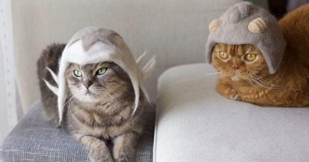 deux chats qui portent des chapeaux