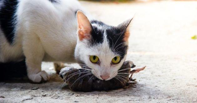 un chat avec un oiseau mort dans la bouche