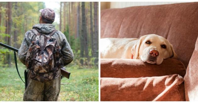 chasseur chien labrador