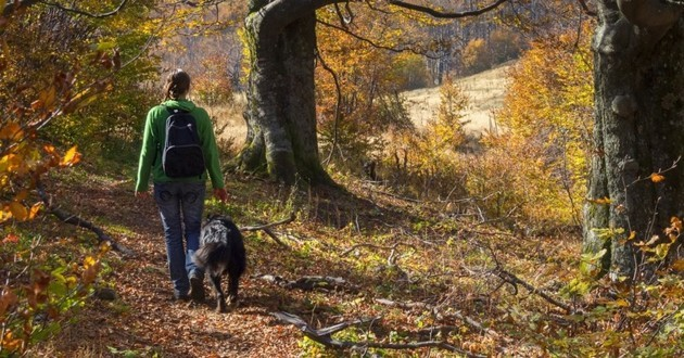 promenade foret chien