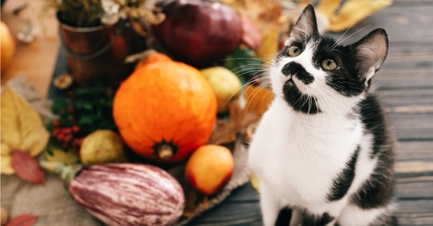 chat a thanksgiving